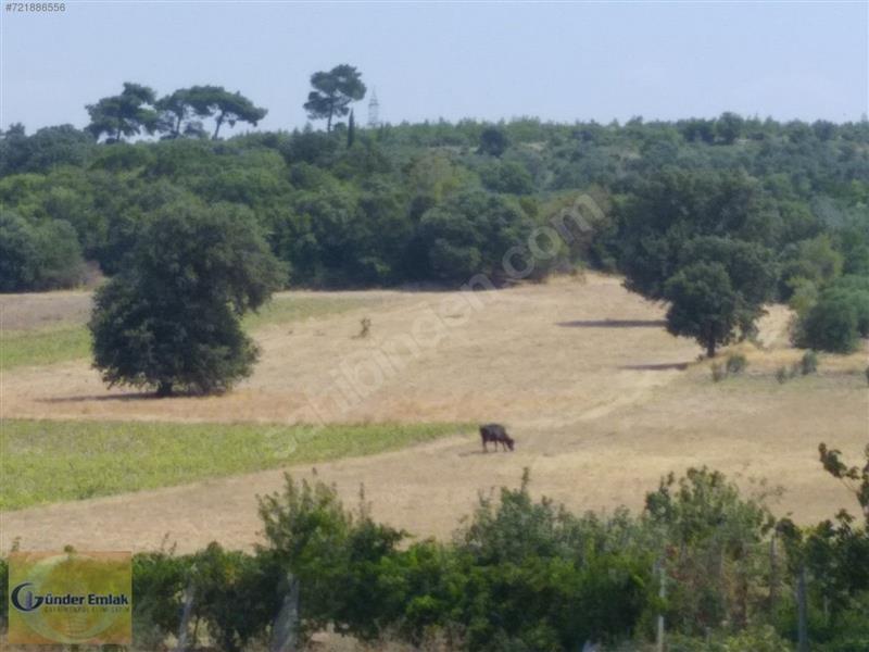 Bergama zeytindağ bölgesinde Satılık tarla