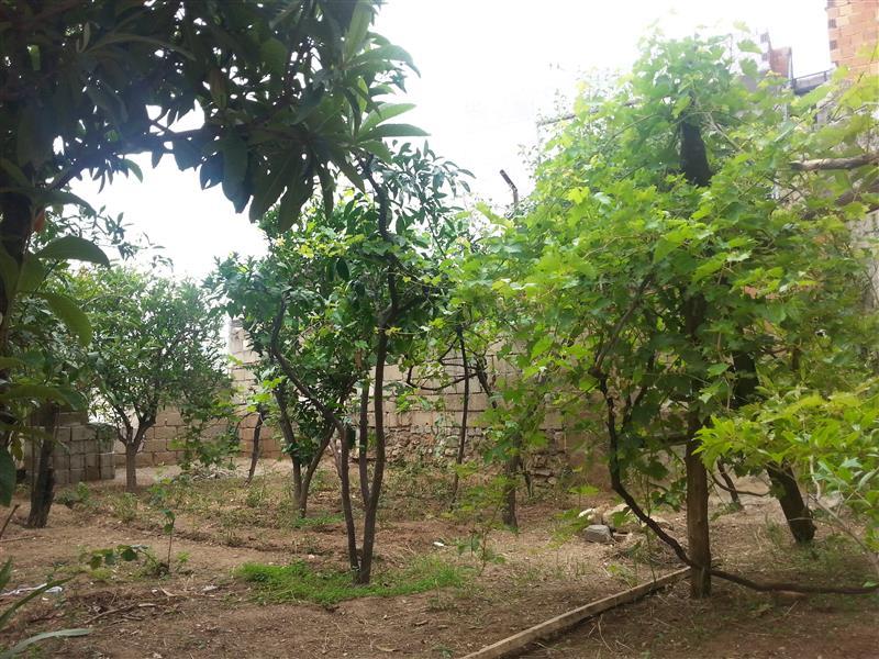 Aydın Merkezde Satılık 639 M2 Arsa İçinde Satılık Müstakil Bahçeli Ev