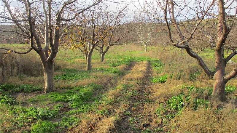 Lapseki Alpot Köyünde Satılık ( 4.880 m2 ) Tarla