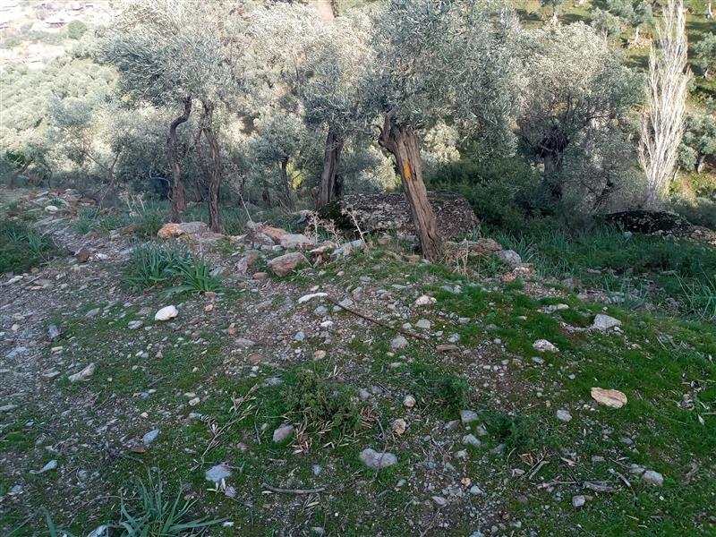 Aydın Merkez Şahnalı Köyünde Satılık 4 Dönüm Kelepir Bahçe